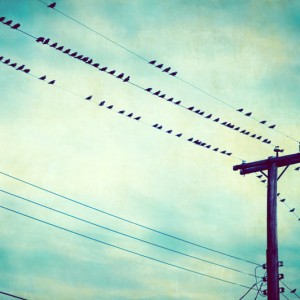 birds-on-wire-photography-teal-print-blue-grn